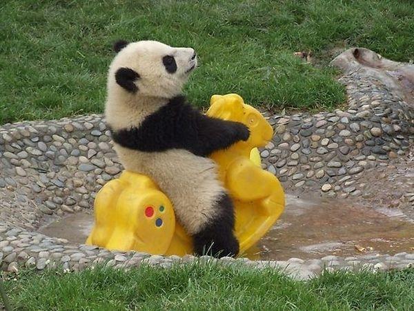 panda se zabava